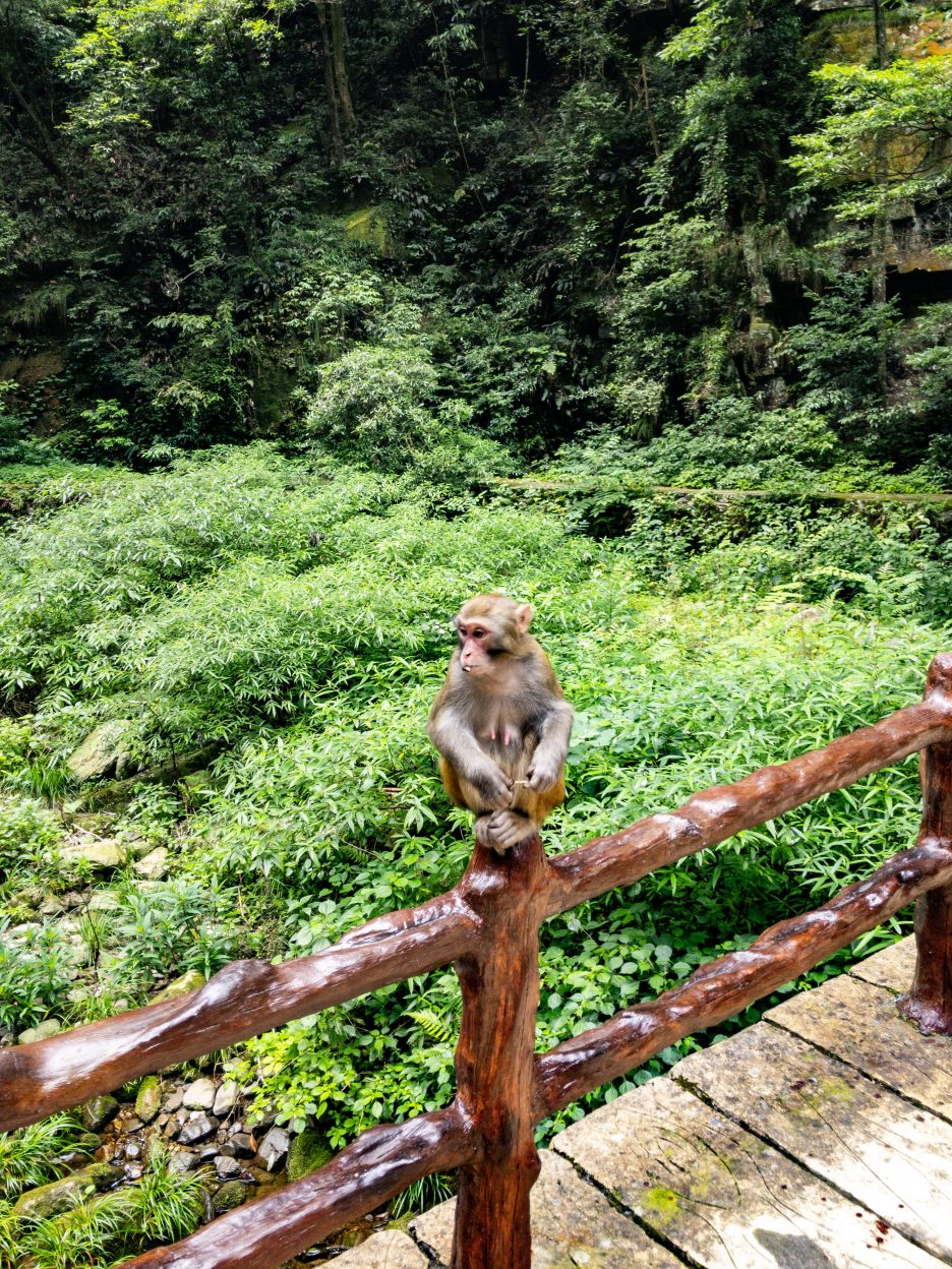 Zhangjiajie park